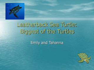 Leatherback Sea Turtle: Biggest of the Turtles