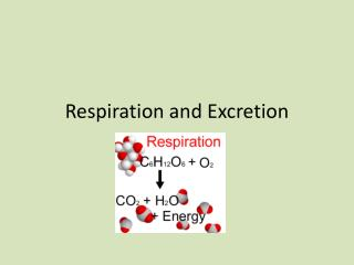 Respiration and Excretion