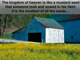 The  kingdom of heaven is like a mustard seed that someone took and sowed in his field;