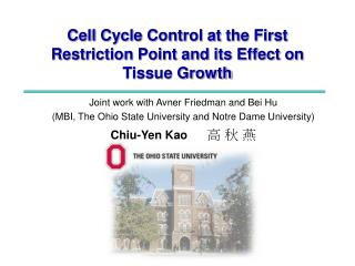 Cell Cycle Control at the First Restriction Point and its Effect on Tissue Growth