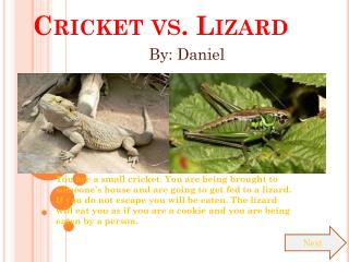 Cricket vs. Lizard