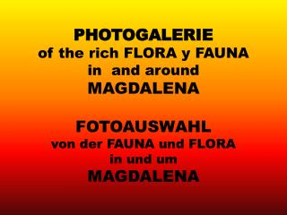 PHOTOGALERIE of the rich FLORA y FAUNA in  and around  MAGDALENA FOTOAUSWAHL