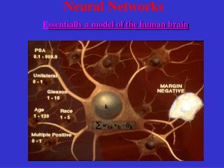 Neural Networks E ssentially a model of the human brain