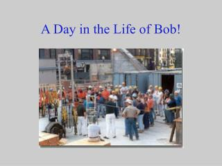 A Day in the Life of Bob!