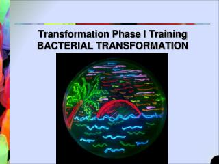 Transformation Phase I Training BACTERIAL TRANSFORMATION