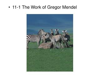 11-1 The Work of Gregor Mendel