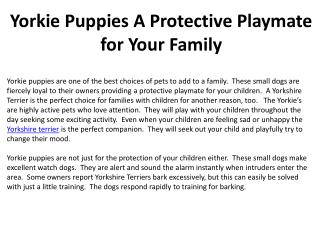 Yorkie Puppies A Protective Playmate for Your Family