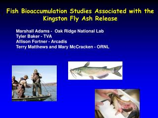 Fish Bioaccumulation Studies Associated with the Kingston Fly Ash Release