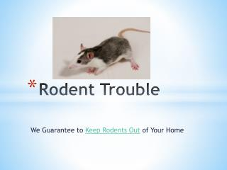 Rodent Problems – We Guarantee To Keep Rodents Out of Your H