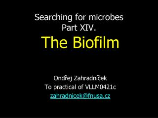 Searching for microbes Part XI V .  The Biofilm