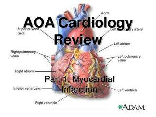 AOA Cardiology Review