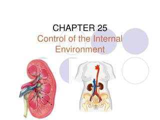 CHAPTER 25 Control of the Internal Environment