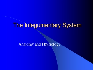 The Integumentary System II