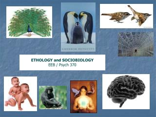 ETHOLOGY and SOCIOBIOLOGY EEB / Psych 370