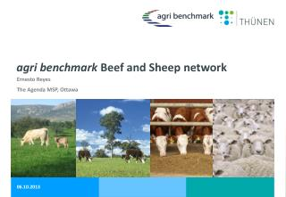agri  benchmark  Beef and Sheep network