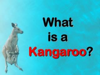 What is a Kangaroo ?
