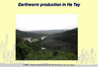 Earthworm production in Ha Tay