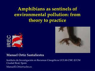 Amphibians as sentinels of environmental pollution: from theory to practice