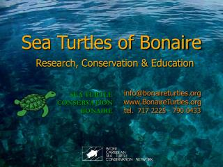 Sea Turtles of Bonaire