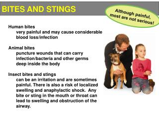 Human bites 	very painful and may cause considerable 	blood loss/infection Animal bites