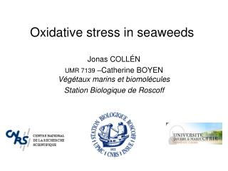 Oxidative stress in seaweeds