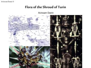 Flora of the Shroud of Turin Avinoam Danin