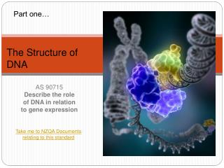 AS 90715 Describe the role of DNA in relation to gene expression