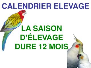 CALENDRIER ELEVAGE