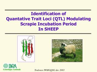 I dentification of  Quantative Trait  L oci  (QTL) M odulating Scrapie Incubation Period  In SHEEP