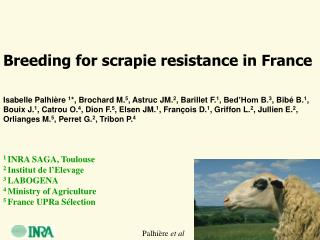 Breeding for scrapie resistance in France