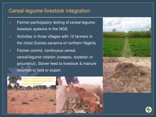 Cereal-legume-livestock integration