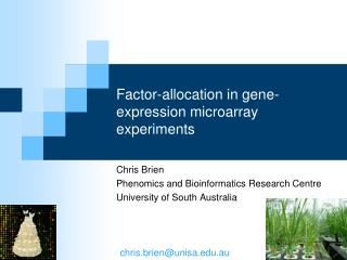 Factor-allocation in gene-expression microarray experiments