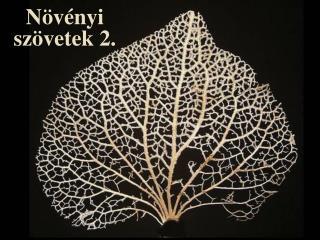 Növényi szövetek 2.