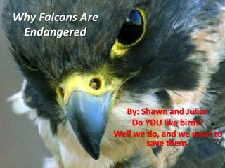 Why Falcons Are Endangered