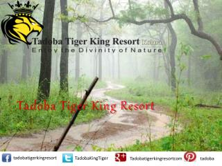 Hotels and Resorts in Tadoba