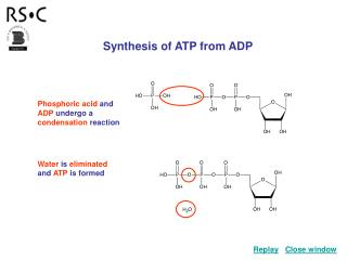 Synthesis of ATP from ADP
