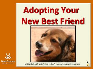 Adopting Your  New Best Friend