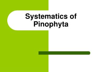 Systematics of Pinophyta