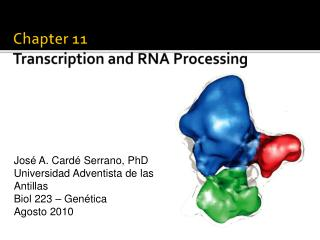 Chapter 11 Transcription and RNA Processing