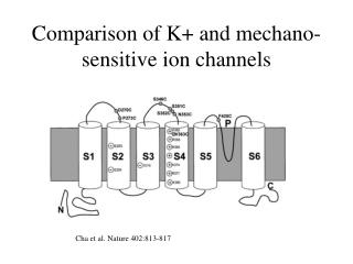 Comparison of K+ and mechano-sensitive ion channels