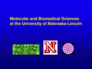 Molecular and Biomedical Sciences  at the University of Nebraska-Lincoln