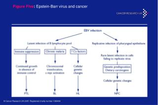 Figure Five : Epstein-Barr virus and cancer