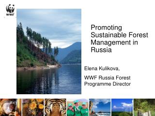 Promoting Sustainable Forest Management in Russia