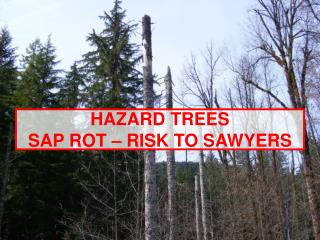 HAZARD TREES SAP ROT – RISK TO SAWYERS