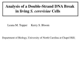 Analysis of a Double-Strand DNA Break  	  in living  S. cerevisiae  Cells