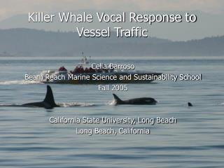 Killer Whale Vocal Response to Vessel Traffic