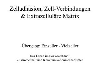 Zelladhäsion, Zell-Verbindungen & Extrazelluläre Matrix