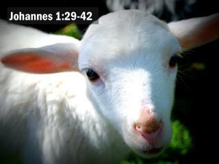 Johannes 1:29-42