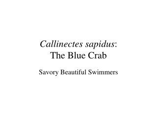 Callinectes sapidus : The Blue Crab