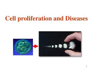 Cell proliferation and Diseases